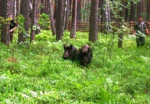 Into the wild по-волинськи